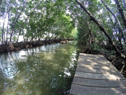 Mangroven bei Semarang